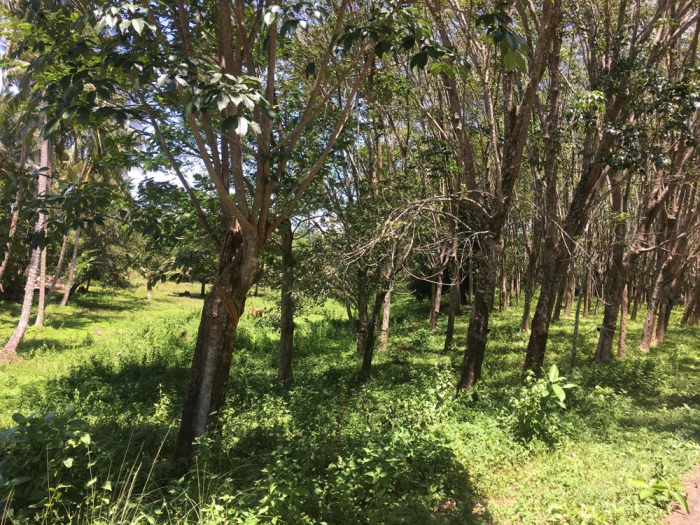Amazing Land in Koh Yao Noi for Sale