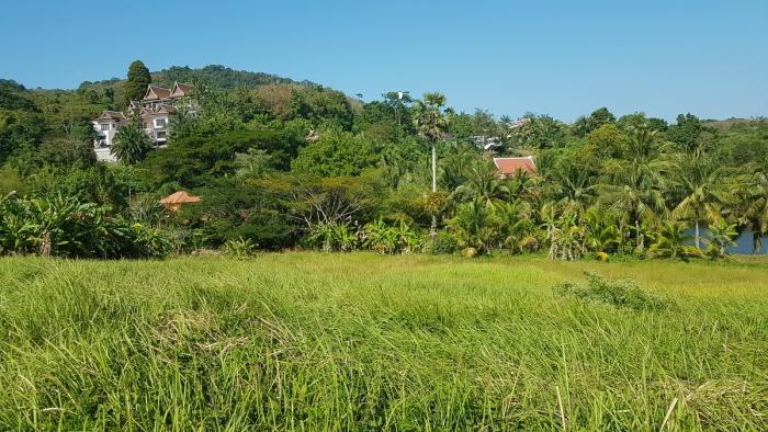 9 Rai Land in Layan for Sale-Land-Layan-Sale06.jpg