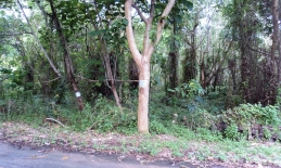 Phuket Tropical Property - Flat land for sale